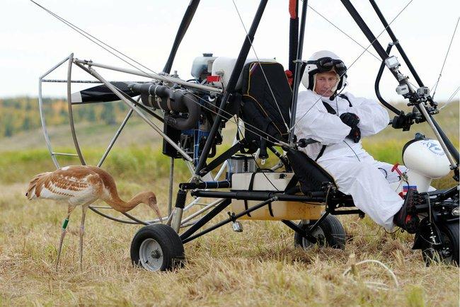 Vladimir Putin leads endangered cranes on migration route